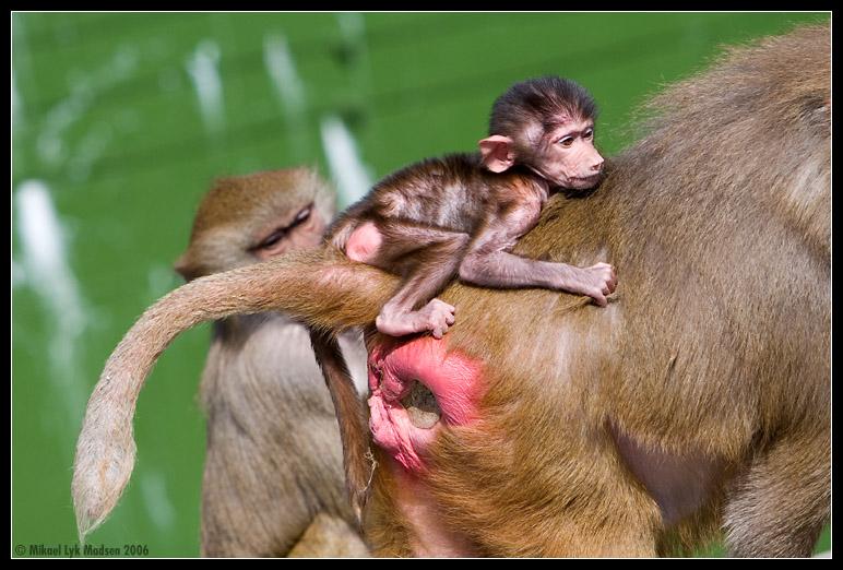 funny danske udtryk herning zoo